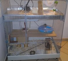 So I am always interested in learning more about animals and I was looking at Degu's and was wondering what size cage is best for a pair? Degu Cage, Pets, House, Animals, Animals And Pets, Animales, Animaux, Haus, Animais