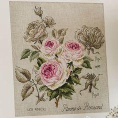 Pierre de Ronsard Rose kit
