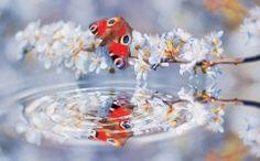 fototapet fluture Planes, Disney, Close Image, Snow Globes, Fish, Flooring, Pets, Floral, Nature