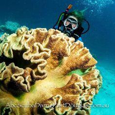 Beautiful leather or toadstool mushroom coral. #corals #scuba #greatbarrierreef #daytours #divingtrip #portdouglasdaintree #portdouglas #diveboats #scuba #underwaterphotographer #underwaterlife by abcscubadivingportdouglas http://ift.tt/1UokkV2