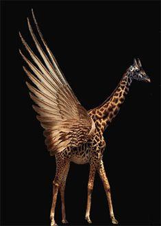 Winged Giraffe by SwanLakeEnterprises on Etsy, $3.50 this is AMAZING!