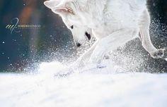 Speedjunkie by Mareike Konrad - Photo 59555488 - 500px