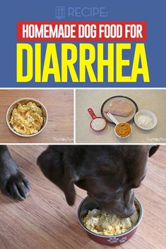Dog Food Design Homemade Dog Food for Diarrhea Recipe [Video Instructions].Dog Food Design Homemade Dog Food for Diarrhea Recipe [Video Instructions] Homemade Dog Treats, Pet Treats, Healthy Dog Treats, Homemade Recipe, Healthy Pets, Food Dog, Make Dog Food, Food For Dogs, Puppy Food