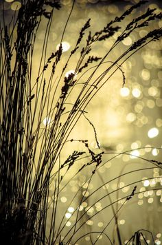 """""""All That Glitters Needn't Be Gold"""" D.Fodie"""