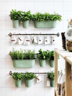 Как правильно выращивать зелень на кухне