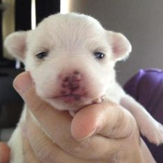 Baby Lisa, born into freedom at National Mill Dog Rescue!!
