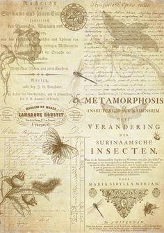 Metamorphosis by auRoraBor