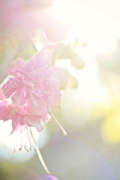 beautiful soft photography