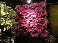stunning bromeliads - Google Search