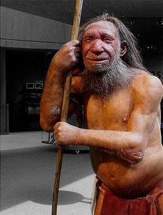 Homo neanderthalensis essay