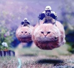 Flying cats cavalry