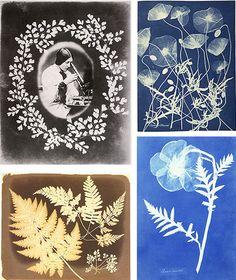 Thereza by John Dillwyn Llewelyn, 1853; Photogram by Anna Atkins, c. 1850; Poppy by Anna Atkins, 1852; Ferns by John Dillwyn Llewelyn, 1850s
