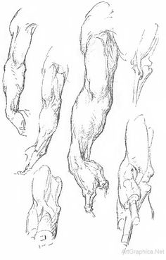 drawing hand and forearm, anatomy for artists, free anatomy art book