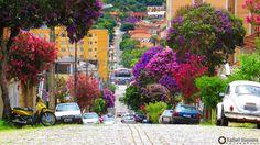 31 árvores que você pode plantar em sua calçada, produzem frutos, sombras e flores, não destroem calçadas e nem danificam a rede elétrica