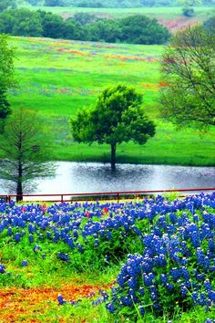 Ennis, Texas where the bluebonnets and wildflowers are the best ever! We try to get there every year in the spring!