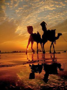 Sunset orange with camel, Karachi, Pakistan