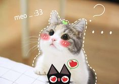 Cute Cats And Kittens, I Love Cats, Kittens Cutest, Cute Funny Animals, Funny Cats, Gatos Cool, Cute Cat Memes, Cute Cat Wallpaper, Cat Aesthetic