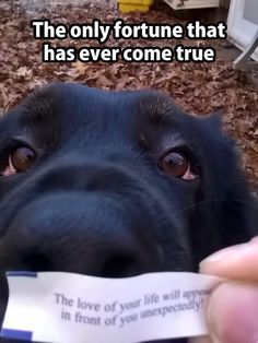 Funny Animal Pictures - View our collection of cute and funny pet videos and pics. New funny animal pictures and videos submitted daily. Animals And Pets, Baby Animals, Funny Animals, Cute Animals, Animal Memes, Cute Puppies, Cute Dogs, Dogs And Puppies, Doggies