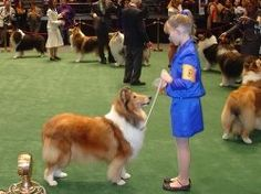 Love a good dog show...collecting dog show sites for each State in the US