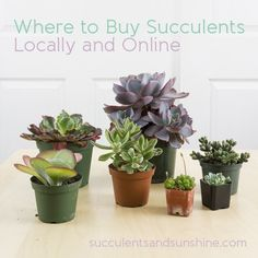 Succulents and Sunshine | Where to buy succulents - a guide for buying online and locally Succulents Online, Succulents For Sale, Colorful Succulents, Succulents In Containers, Planting Succulents, Garden Plants, Indoor Plants, Planting Flowers, Herb Garden