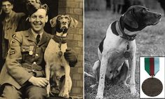 Amazing Story- Everyone should read this if you love dogs and ww2