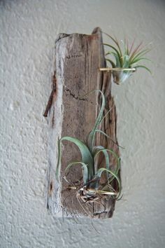 One of a Kind Drift Wood & Copper Wire Air Plant Holder Display Mount
