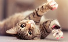 Cat Kitten HD Wallpaper