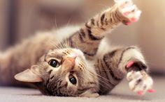 Cat Kitten HD Wallpaper