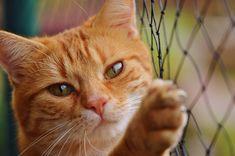 Gato, Ressaca, Vermelho, Bonito, Cavala, Tigre, Doce