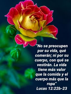 Me preocuparé por salvar mi Alma Christian Verses, Christian Messages, Gods Love Quotes, Quotes About God, Bible Encouragement, Christian Encouragement, Lucas 12, Tips To Be Happy, Beautiful Prayers