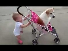 dogs fun with parrot and babies #actuallyfunny #fun #funny #lol #happy #smile