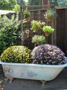 the vintage claw foot tub filled with mums