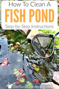 garden care backyards Cleaning fish pond water doesnt have to be a major struggle. these detailed natural fish pond cleaning instructions, and learn how to take care of a pond so your pond water will stay clean!