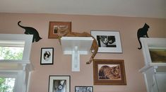 CatClimbingShelves2.jpg 640×354 pixels