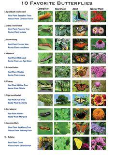Catepillar - Host Plant - Adult - Nectar Plant Texas Butterflies chart Butterfly Feeder, Butterfly Plants, Butterfly House, Butterfly Cards, Monarch Butterfly, Butterflies, Garden Yard Ideas, Garden Projects, Garden Landscaping