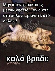 Funny Memes, Jokes, Good Night, Just In Case, Lol, Humor, Greeks, Animals, Quotes