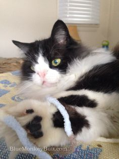 Snuffy Clone Meow Monday