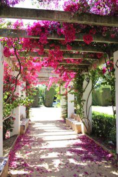 House Plants Decor, Plant Decor, Outdoor Rooms, Outdoor Gardens, Beautiful Gardens, Beautiful Flowers, Landscape Design, Garden Design, Pergola Design