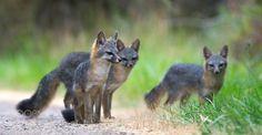The Three Musketeers by WildlingPhoto #animals #animal #pet #pets #animales #animallovers #photooftheday #amazing #picoftheday