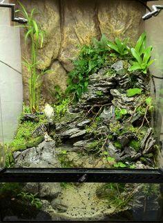 EA pre-renovation sale! Updated 08.05.13 Terrariums, Terrarium Tank, Snake Terrarium, Aquarium Terrarium, Reptile Room, Reptile Cage, Planted Aquarium, Frog Habitat, Aquarium Design