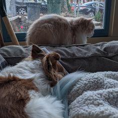 Cat dog puppy kitten soft Brand Board, Dogs And Puppies, Bean Bag Chair, Kitten, Cats, Inspiration, Cute Kittens, Biblical Inspiration, Kitty