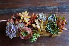 Fifteen Small to Medium Succulent Cuttings Ranging from 1.5 to 3 inches, these succulents are clipped straight from my garden for your order. Plants will be different from what is pictured depending on availability, though I do my best to include different colors, shapes and textures.