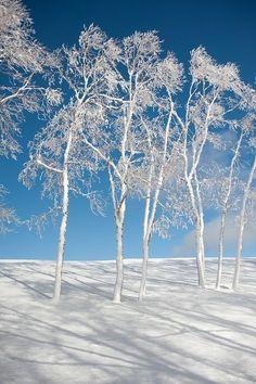 Snow white trees in Utsukushigahara Heights in Nagano, Japan. So very pretty. I Love Snow, I Love Winter, Winter Is Coming, Winter Time, Winter Snow, All Nature, Amazing Nature, Winter Schnee, Nature Sauvage