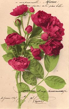 French antique postcards flower Fairymelody collections http://www.amazon.co.jp/dp/B00T1O49EY/ref=cm_sw_r_pi_dp_nfY5vb1VWEYGV