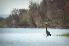 Sarah's Scenes, Real Life Photographer: Kayaking around Ridgefield NWR