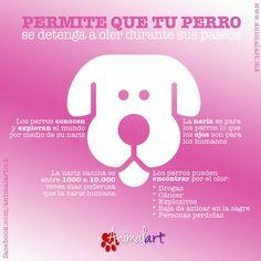 Permite que tu perro se detenga a oler durante sus paseos #perros #mascotas #canes #magazine