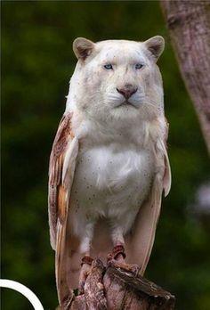 Leagle- great hybrid animals