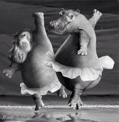 """Hippo Ballet"" by Mandrak~♛"