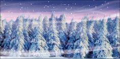 Backdrops Beautiful: Winter Forest 1B