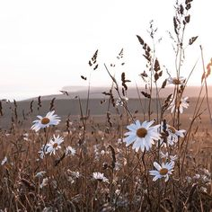 the one with the daisies. My favourite field is on the turn again, the grass is almost golden and the flowers are moving through their… Flower Aesthetic, Aesthetic Photo, Aesthetic Pictures, Imagen Natural, Brown Aesthetic, Summer Aesthetic, Of Wallpaper, Aesthetic Wallpapers, Wild Flowers